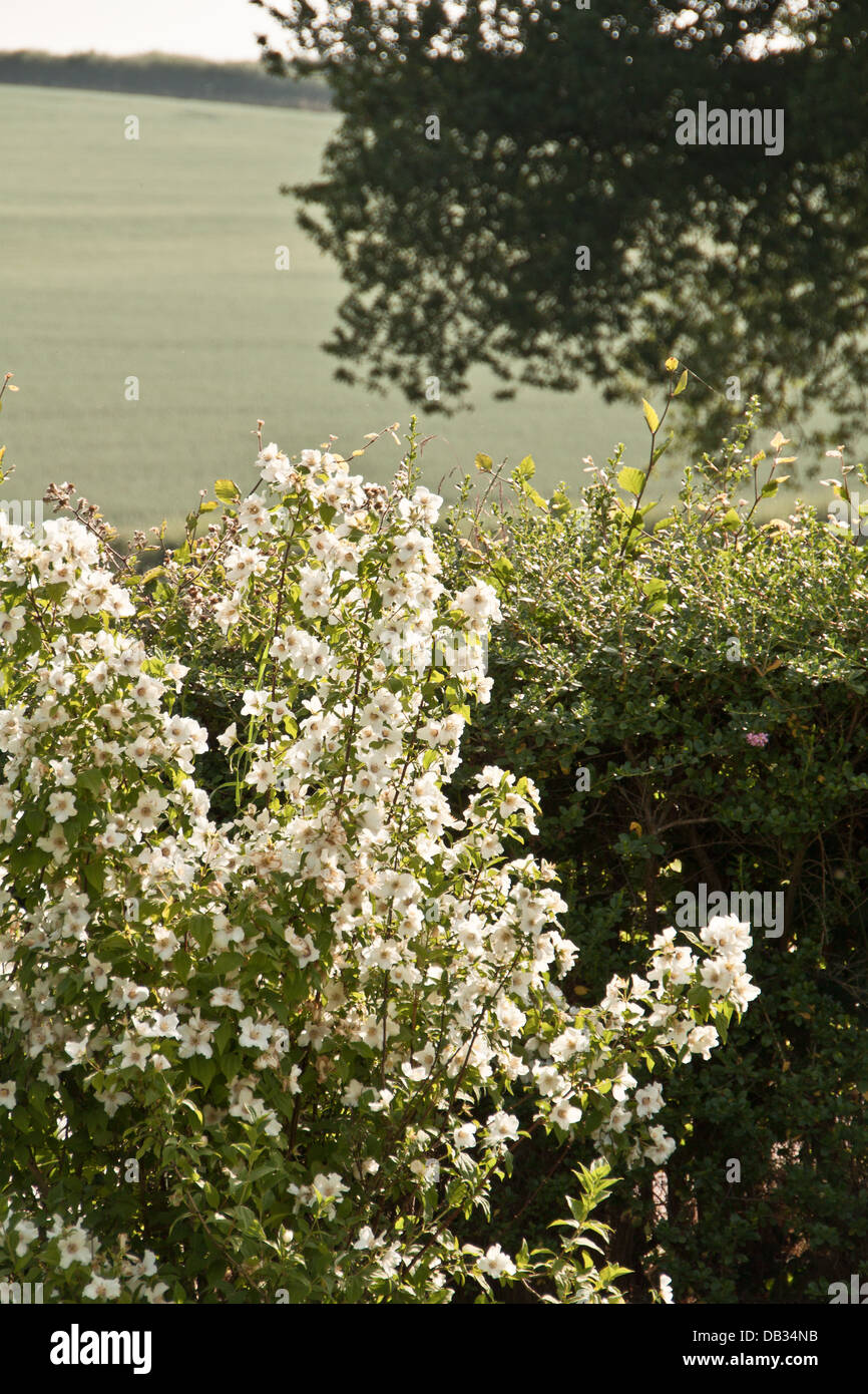 Shrubs And Flowers In An English Garden Stock Photo 58461911 Alamy