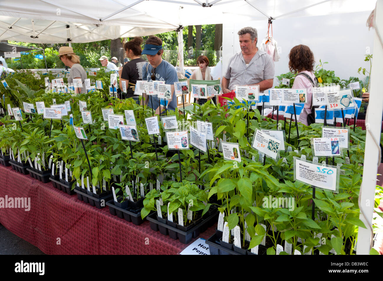 Union Square greenmarket, NYC - Stock Image