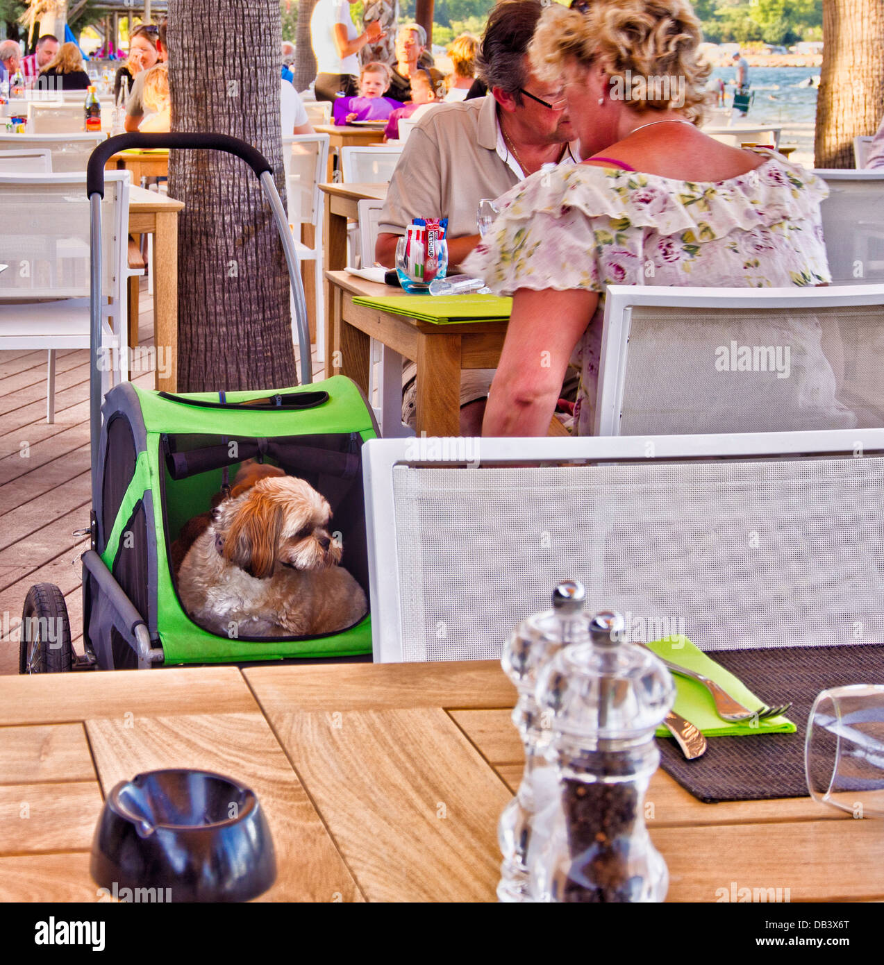 Pampered pet dog sitting in pet pushchair whilst owners sit in restaurant waiting for a meal, Port Grimaud, France - Stock Image