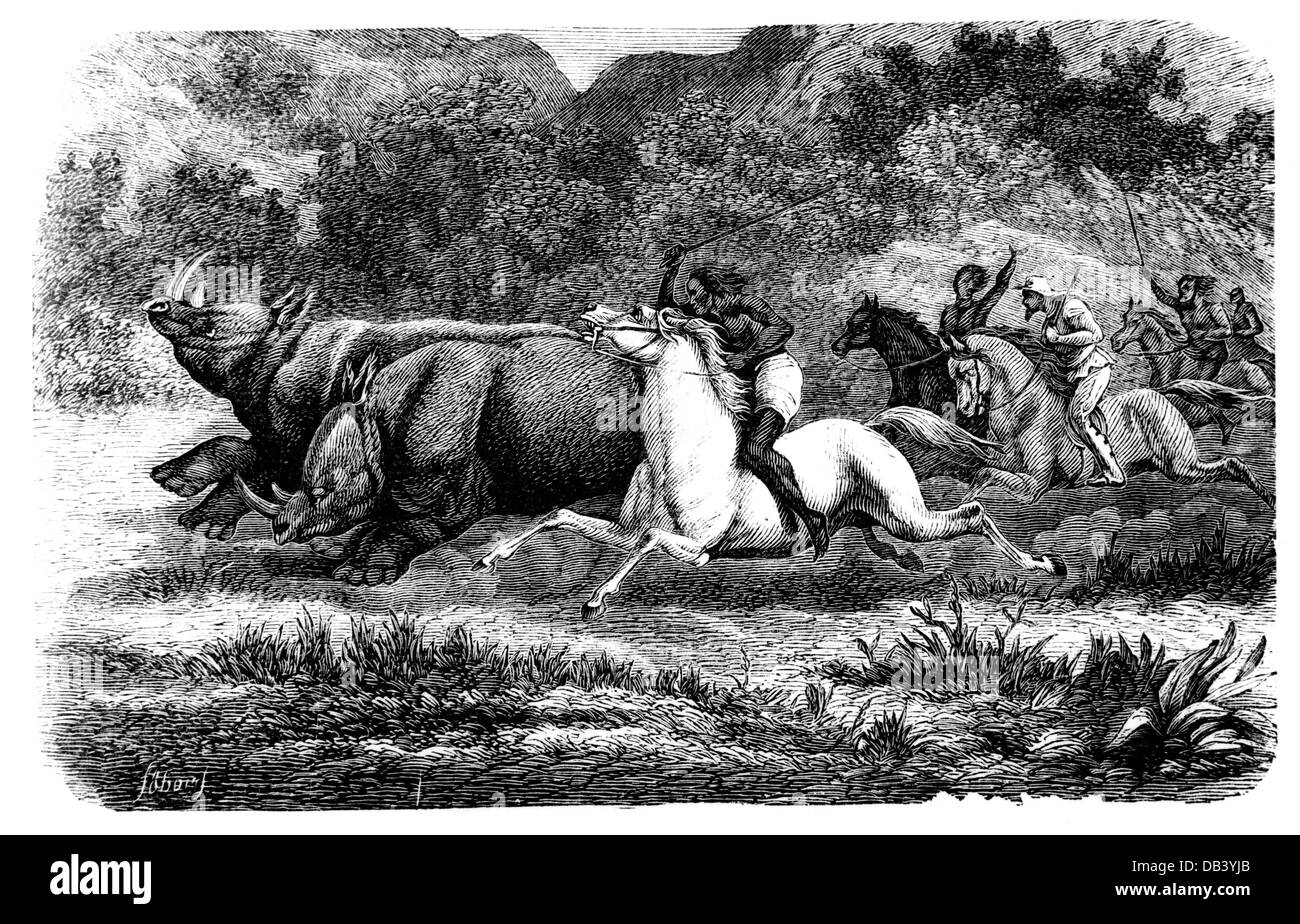 hunting, rhinoceros, hunters on horses chasing two rhinoceroses, wood engraving, circa 1870, Additional-Rights-Clearences - Stock Image