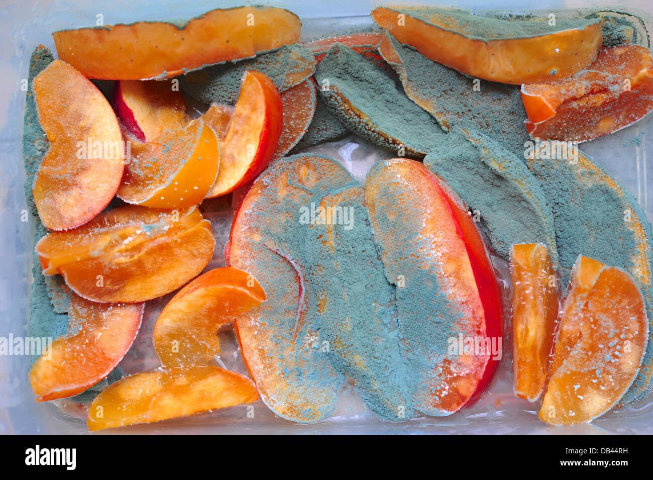 Fungi in fruit - Stock Image