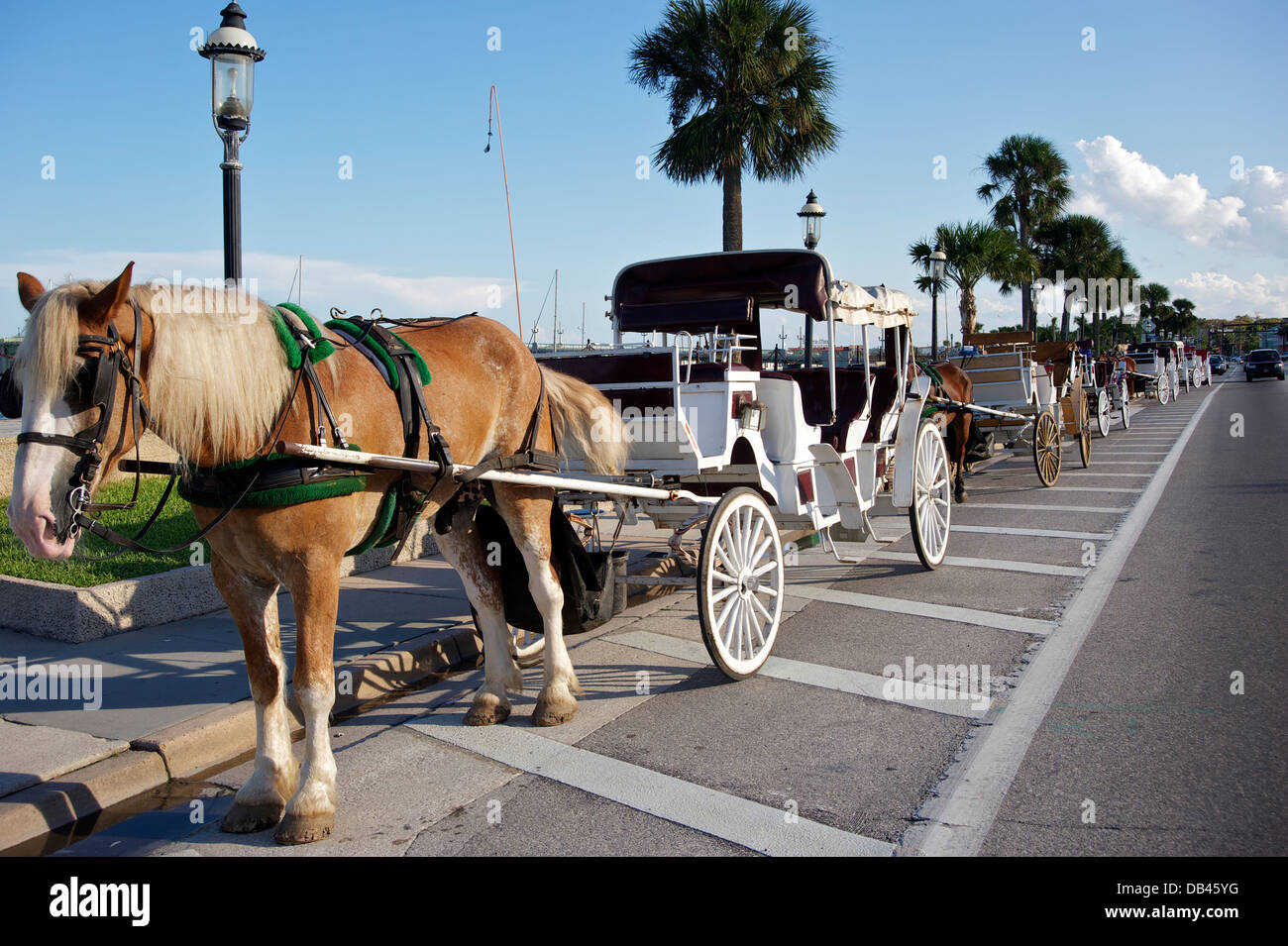 Carriages, St. Augustine, Florida - Stock Image