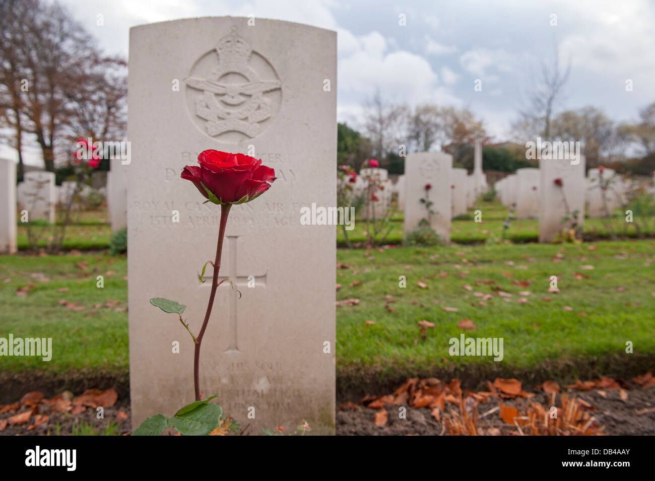 Single red rose growing in front of headstone, other memorials beyond - Commonwealth war graves at Stonefall Cemetery, Stock Photo