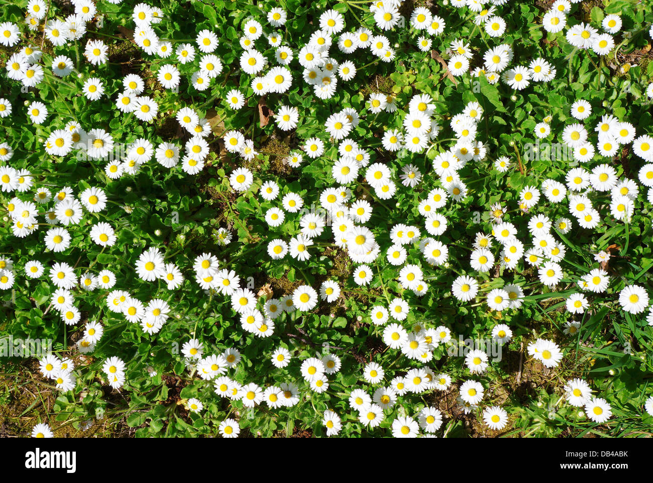 White Cobbles Or Stones As Ground Cover Stock Photos White Cobbles