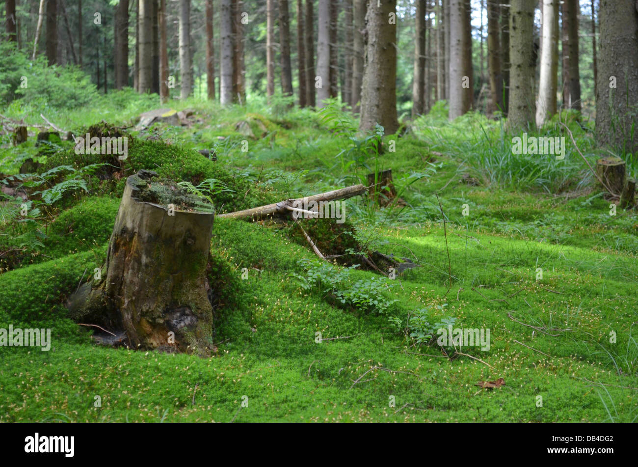 Old stamp in a moss - Stock Image