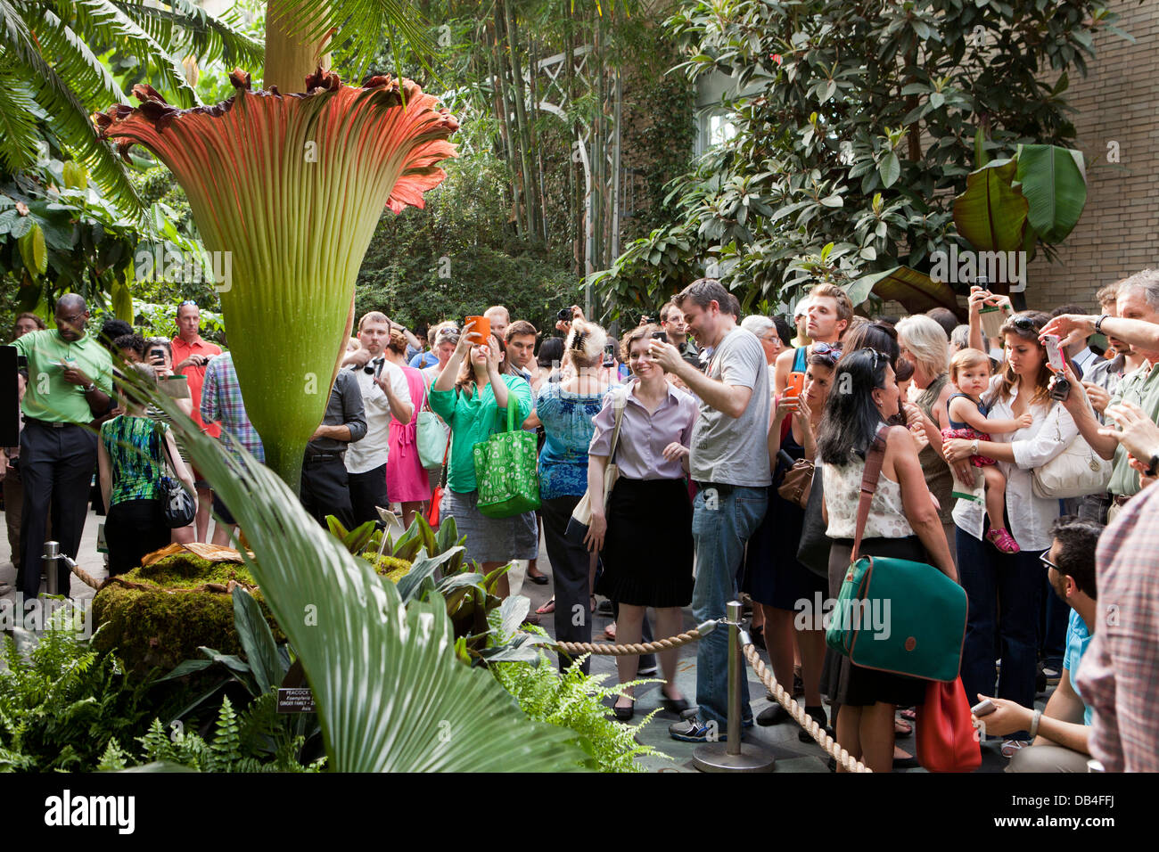 People viewing the rare Corpse flower (Titan Arum) at the US Botanic Garden in Washington, DC Stock Photo