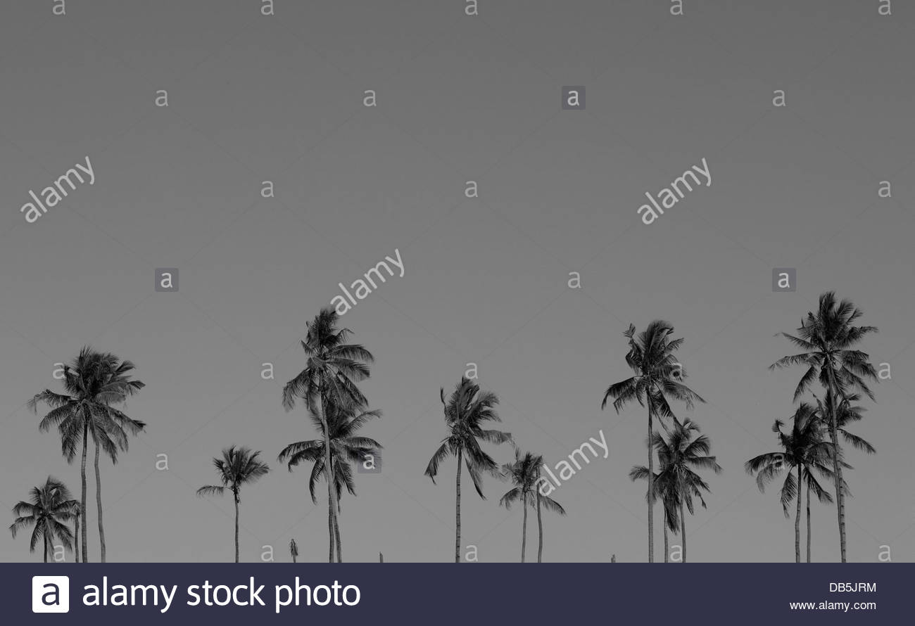 Palm trees in storm, Dar Es Salaam, Tanzania - Stock Image