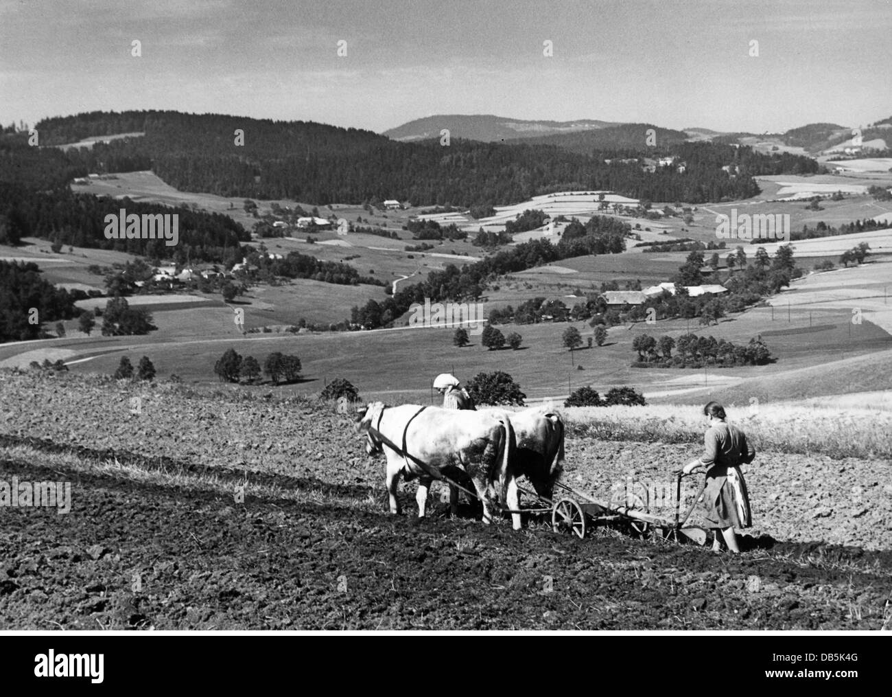agriculture, ploughing, young woman ploughing a field, Bavarian Forrest, August, 1958, Additional-Rights-Clearences - Stock Image