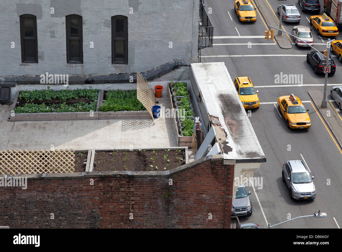 Vegetable garden on a rooftop in New York City - Stock Image