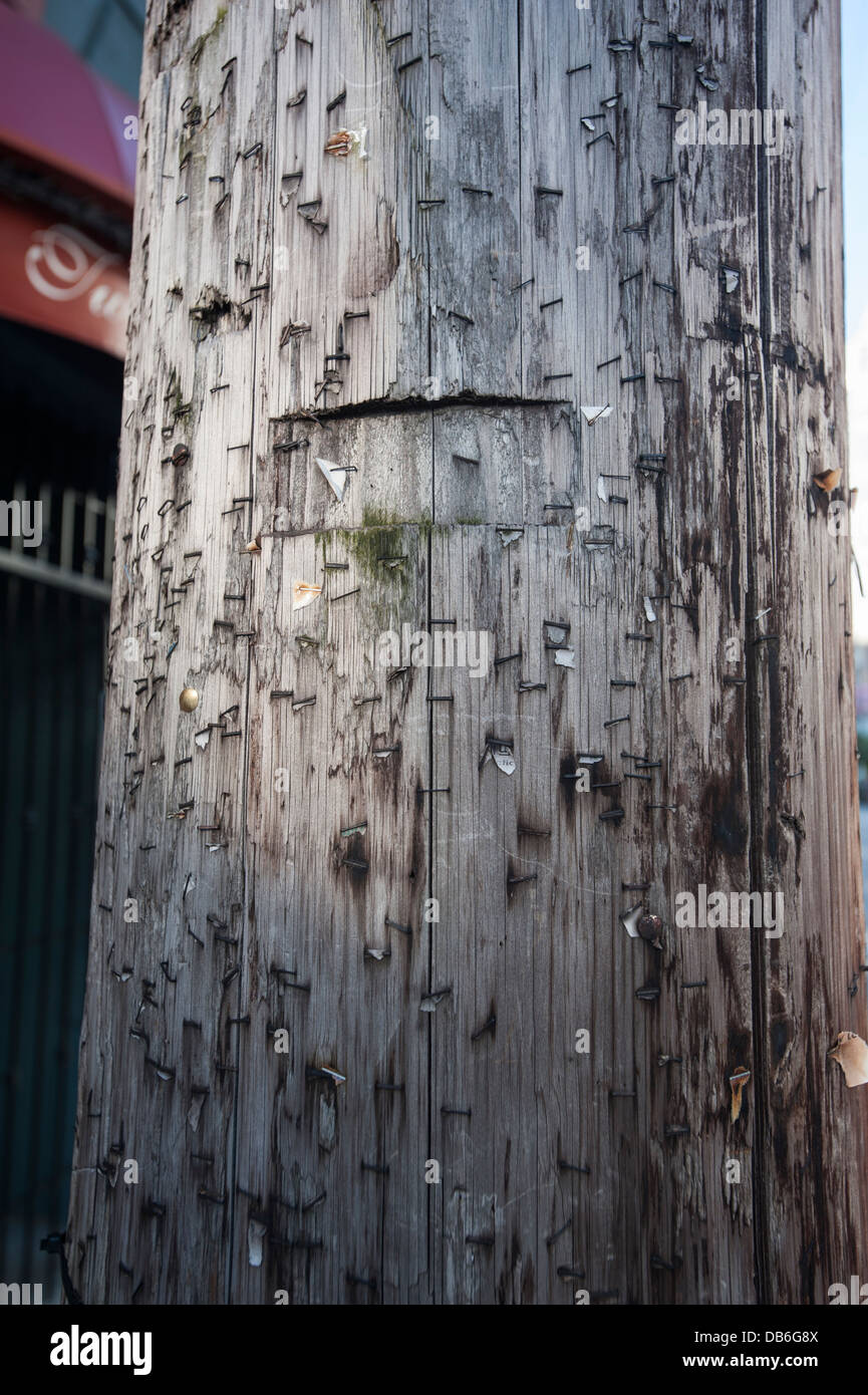Telephone pole littered with staples. - Stock Image