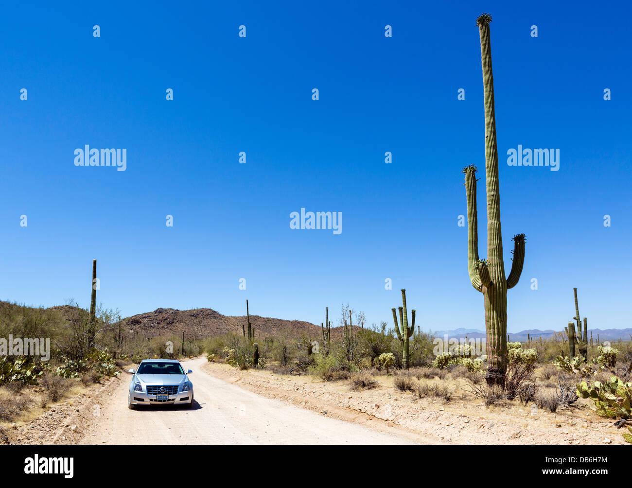 Driving through Saguaro National Park West, Tucson, Arizona, USA - Stock Image