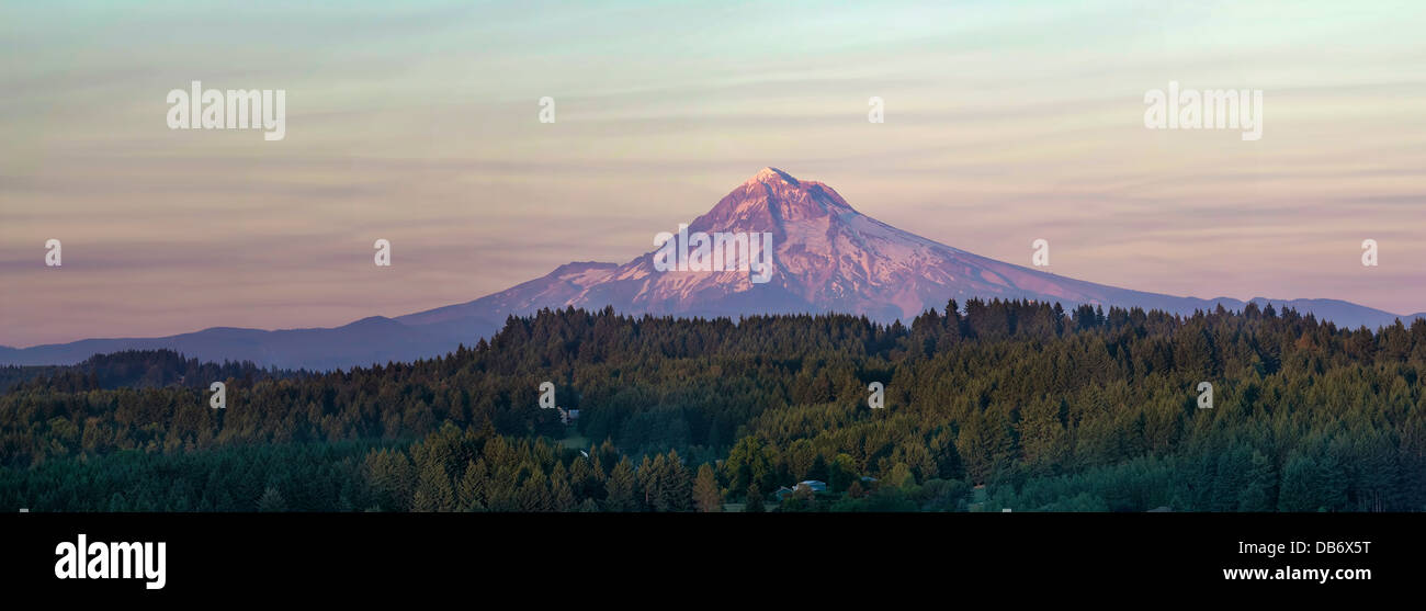 Mount Hood at Sunset Over Oregon Rural Area Landscape with Evergreen Trees Panorama - Stock Image