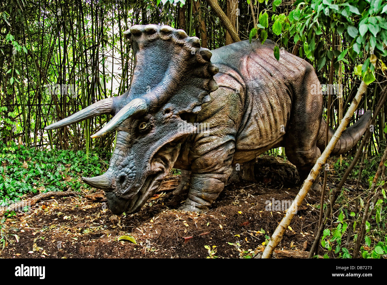 Triceratops (which means 'three horned face') dinosaur from the late Cretaceous period. - Stock Image