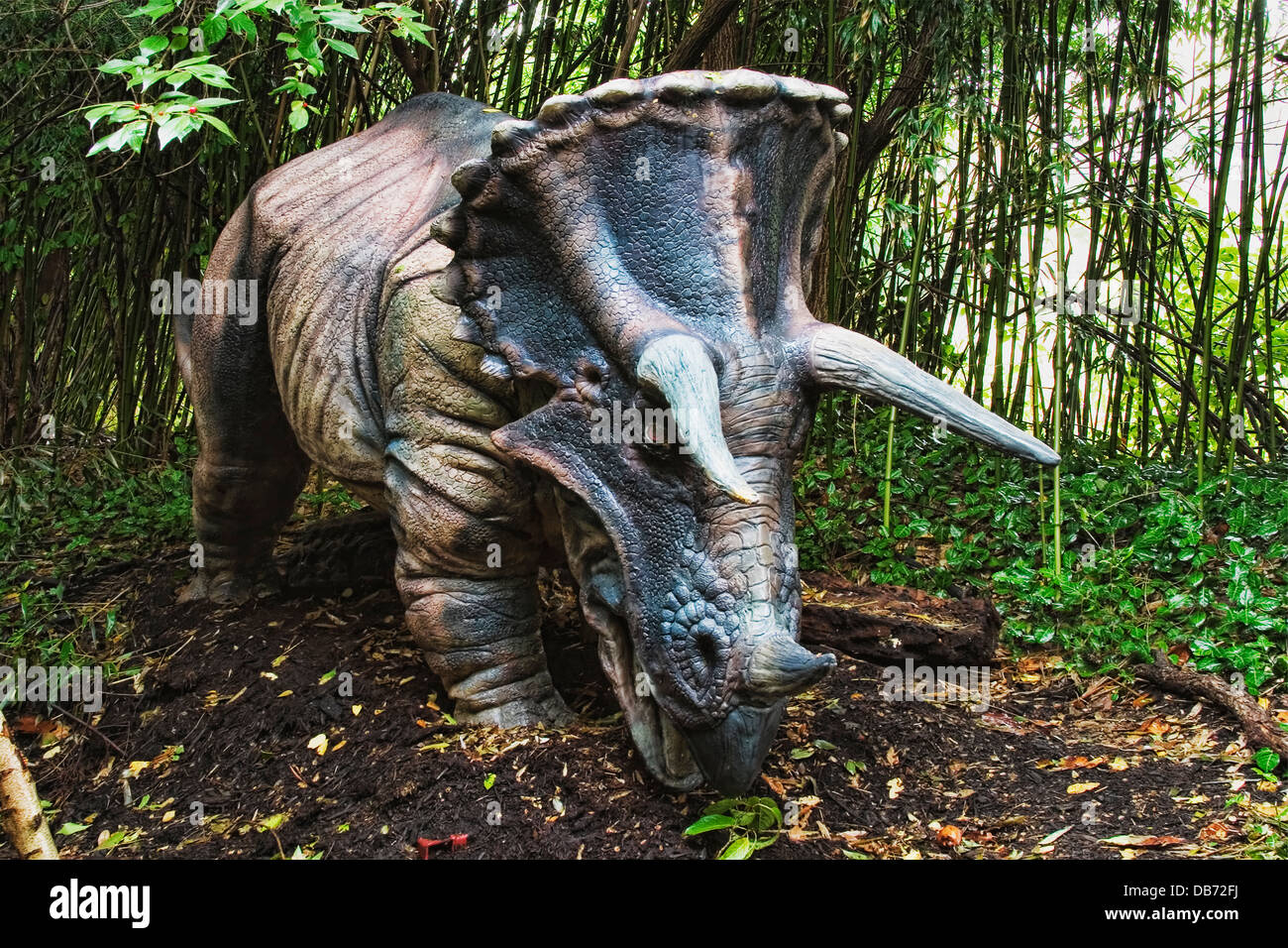 """Triceratops (which means """"three horned face"""") dinosaur from the late Cretaceous period. Stock Photo"""