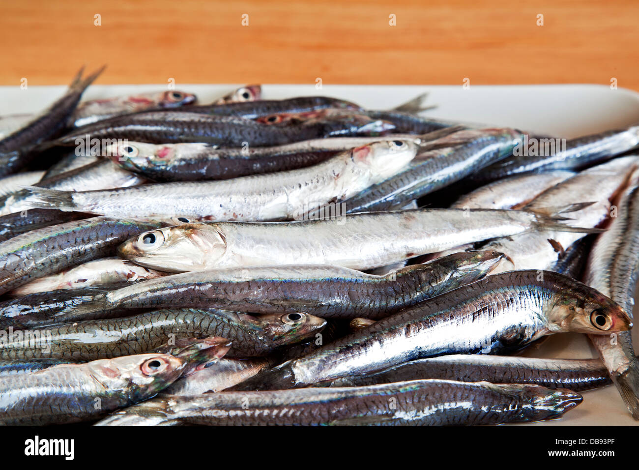 Anchovies. - Stock Image