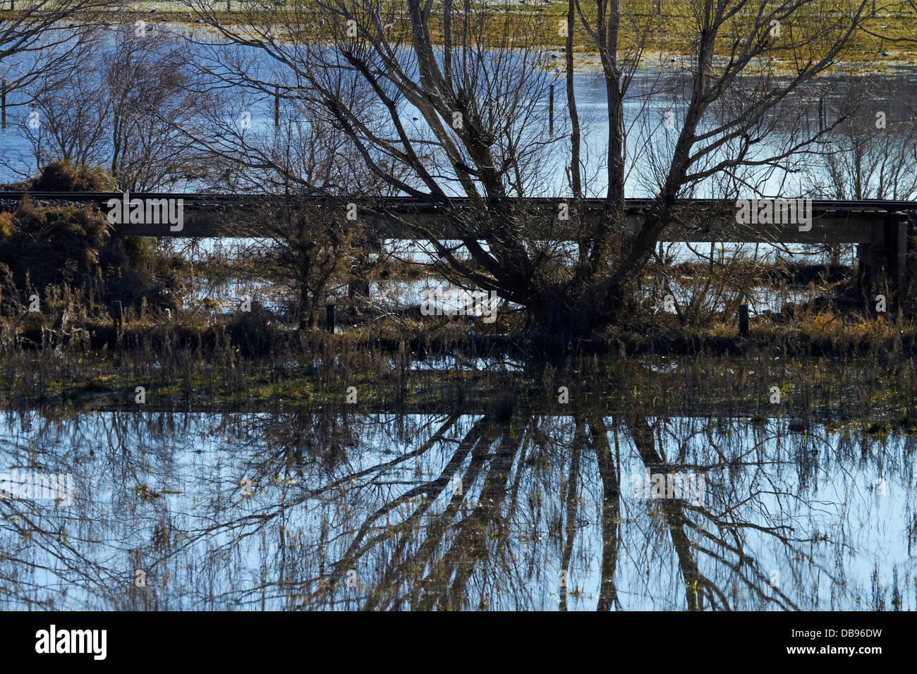 Railway line, willows and flooding, Taieri Plains, near Dunedin, South Island, New Zealand - Stock Image