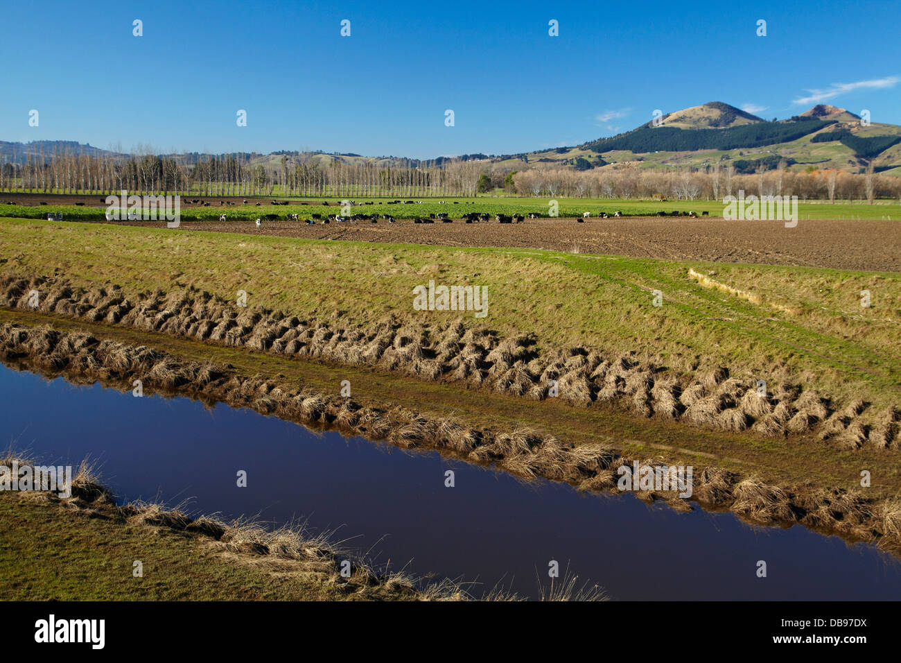 Silver Stream and flood banks, Taieri Plains, near Dunedin, South Island, New Zealand Stock Photo