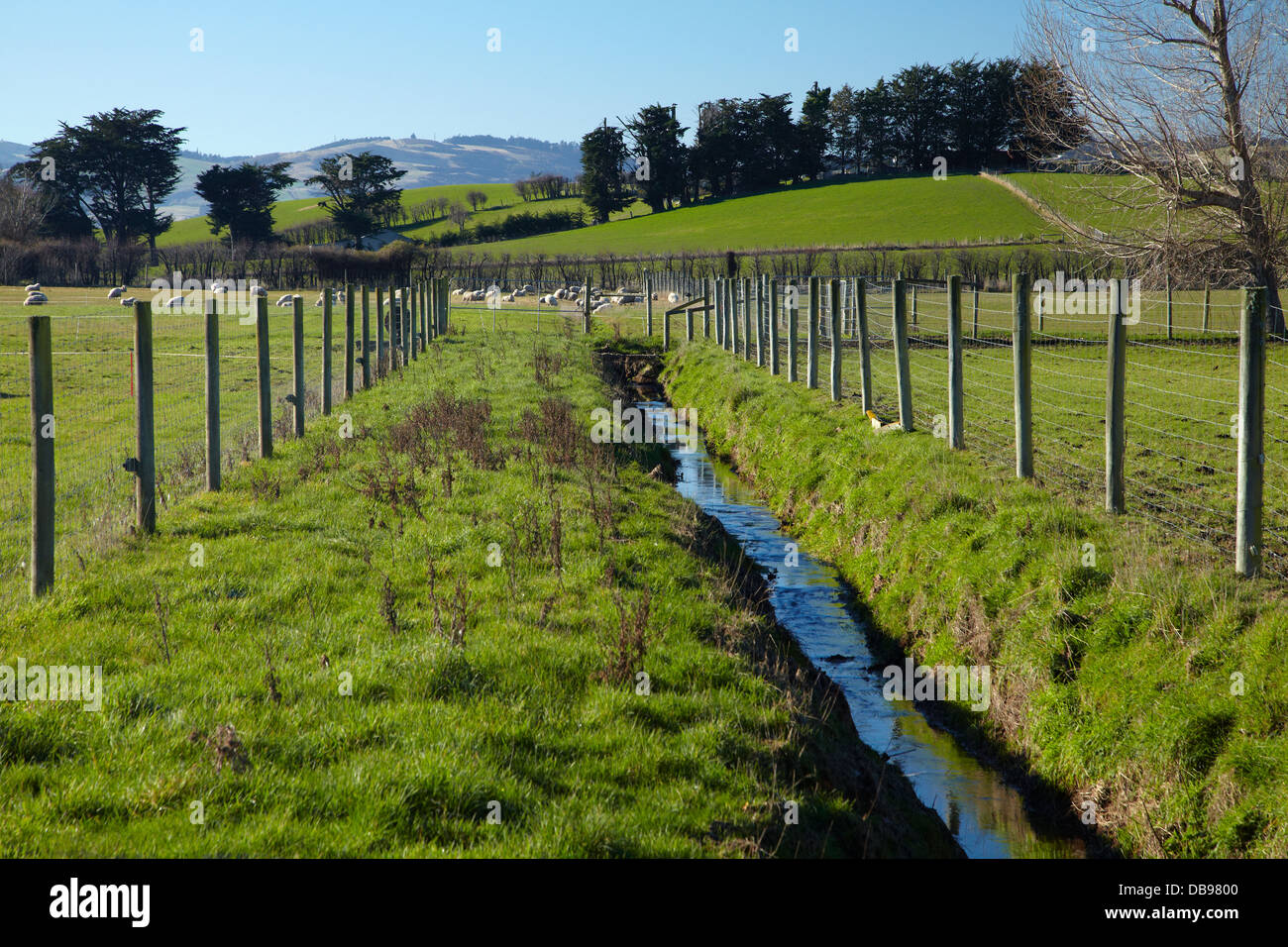 Drainage channel and fenced riparian strip, Taieri Plains, near Dunedin, South Island, New Zealand Stock Photo