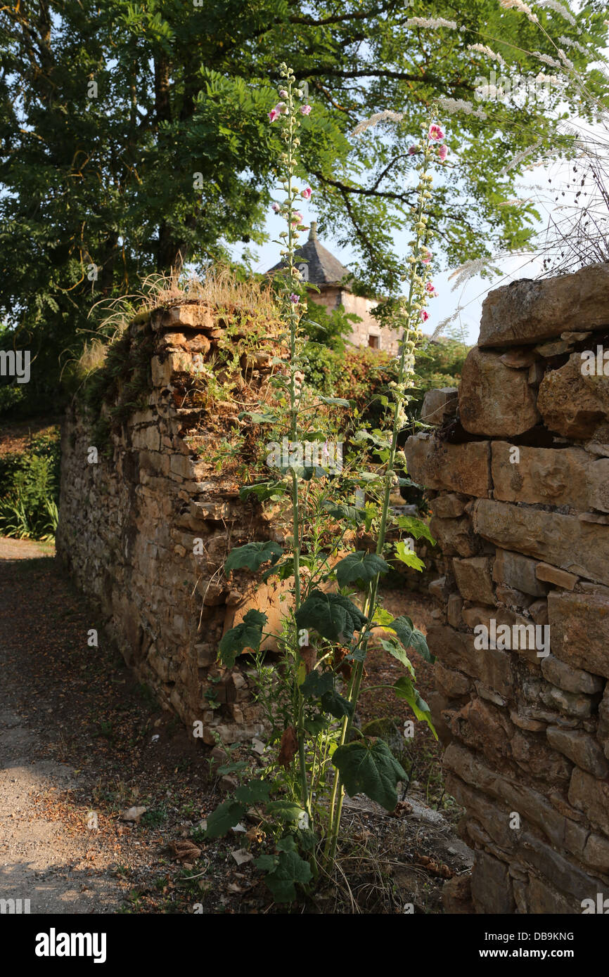 Pigeonnier and hollyhocks growing on a broken wall in the mediaeval hamlet of La Contie,  part of the commune of - Stock Image