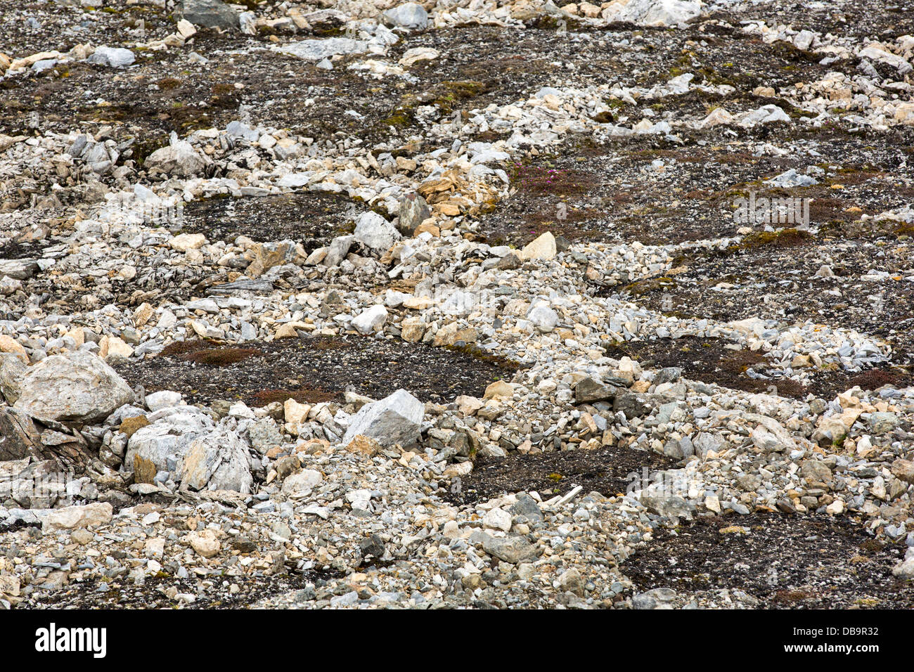 Patterned ground and stone circles formed above permafrost in the high Arctic on Spitsbergen, Svalbard. - Stock Image