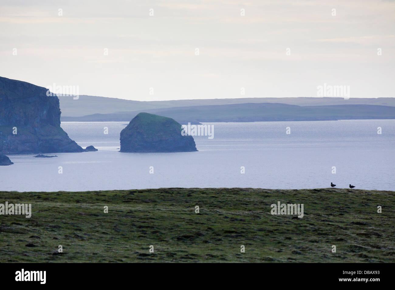 Fetlar; Cliffs; Shetland; UK - Stock Image