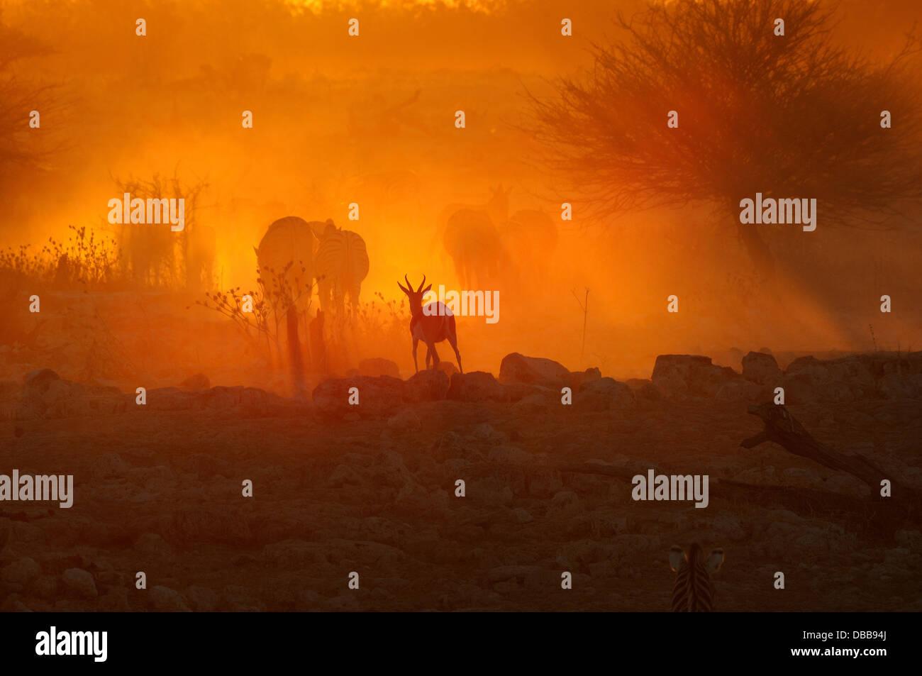 A fiery sunset at Okaukeujo waterhole, Namibia - Stock Image