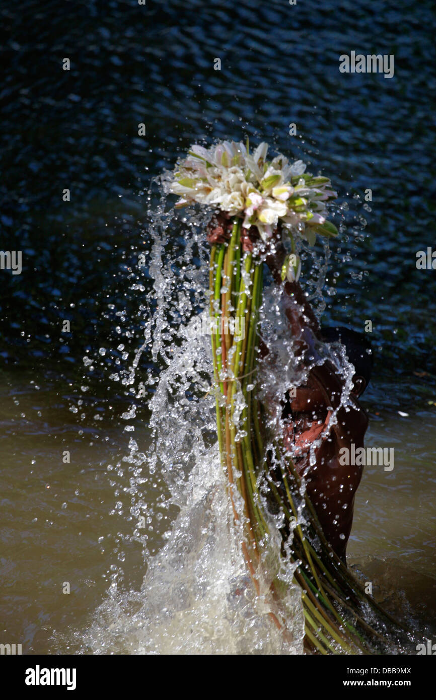 Wetlands farmer collect water lilies in Bangladesh - Stock Image