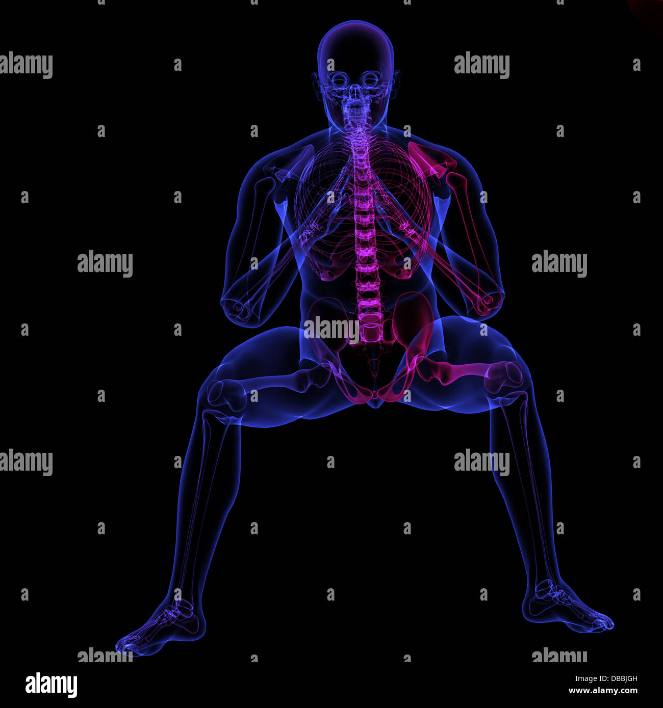 Human Body X Ray Made In 3d Software Stock Photo 58648369 Alamy