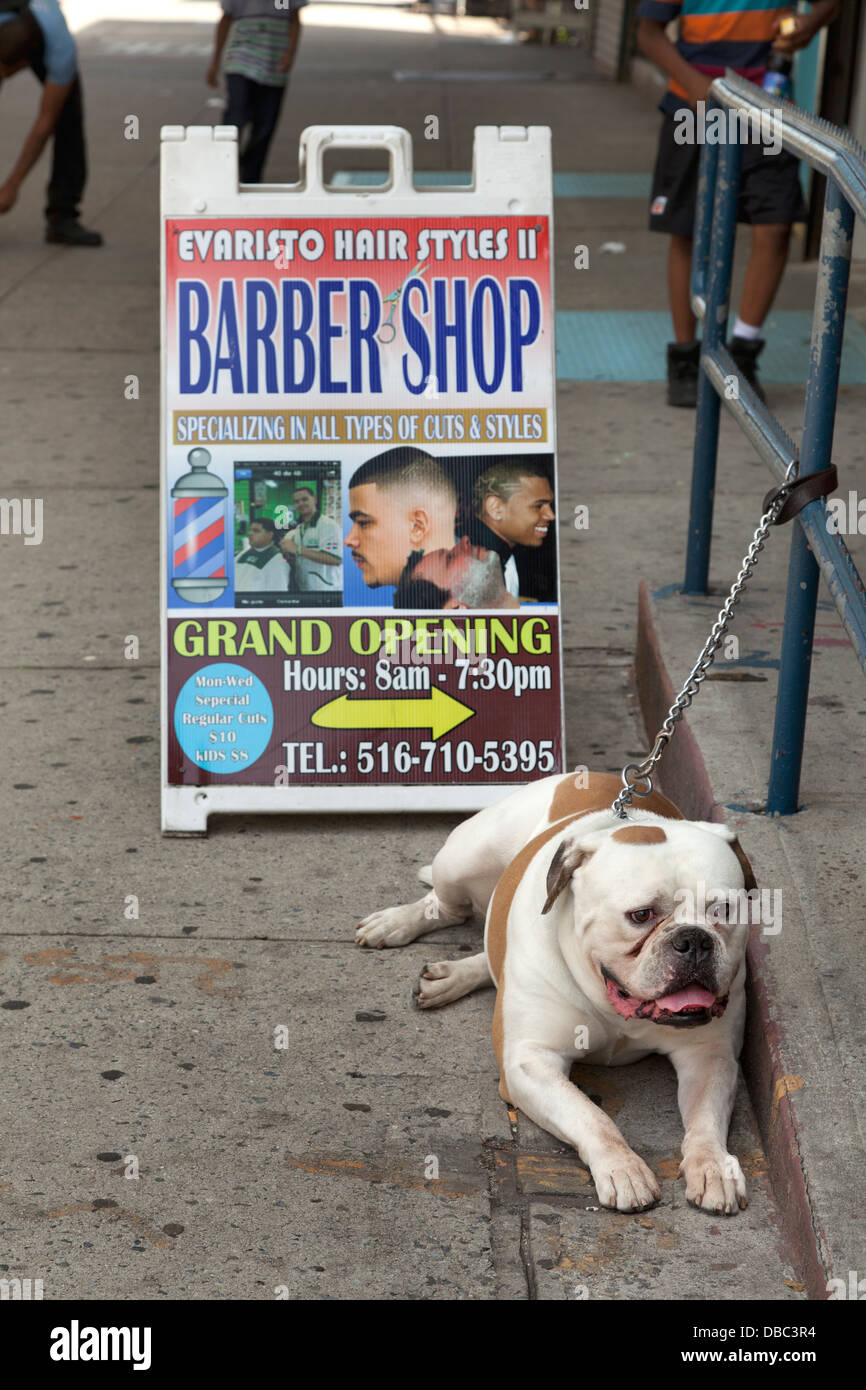Dog in front of a barber shop in NYC Stock Photo