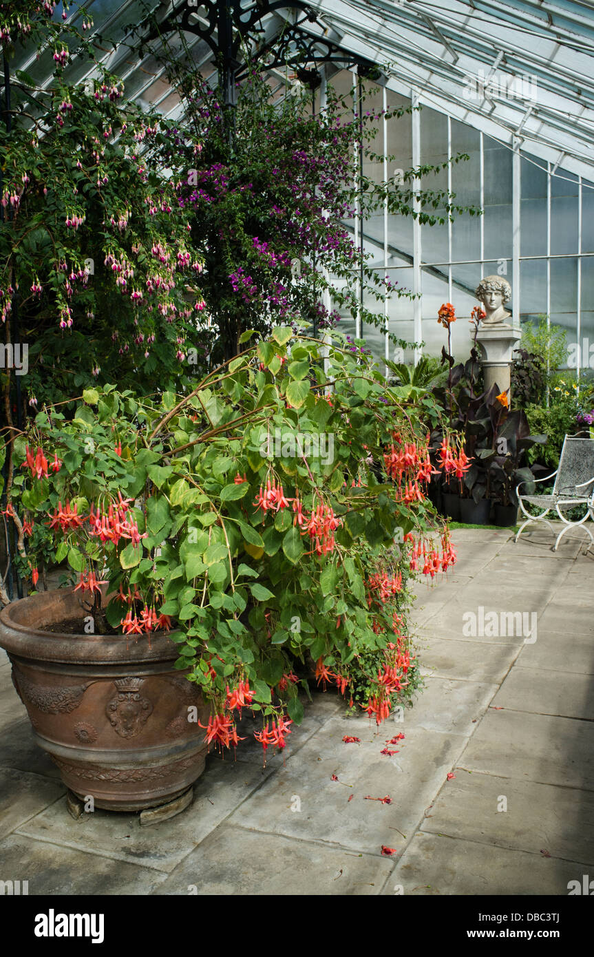 Wallington, the Conservatory - Stock Image