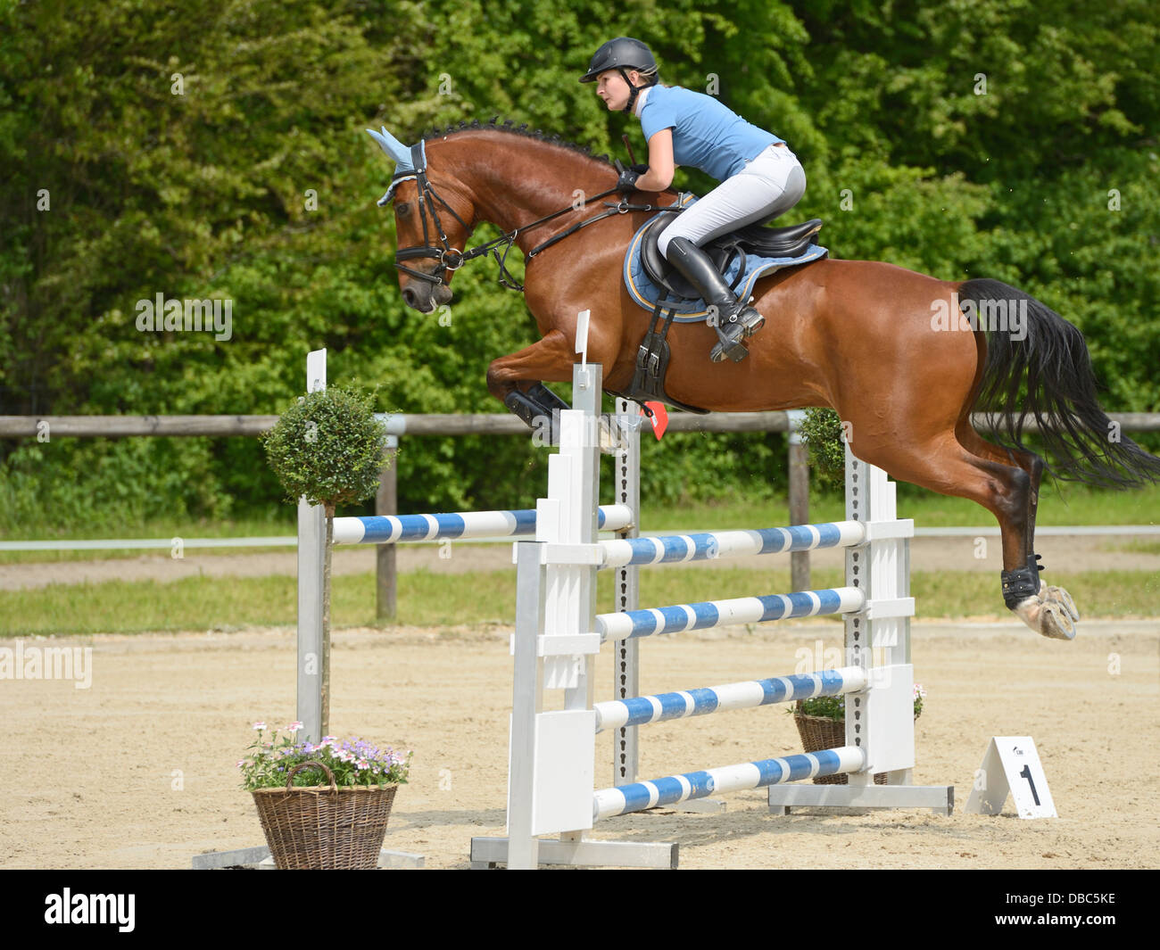 Show Jumping Oxer High Resolution Stock Photography And Images Alamy
