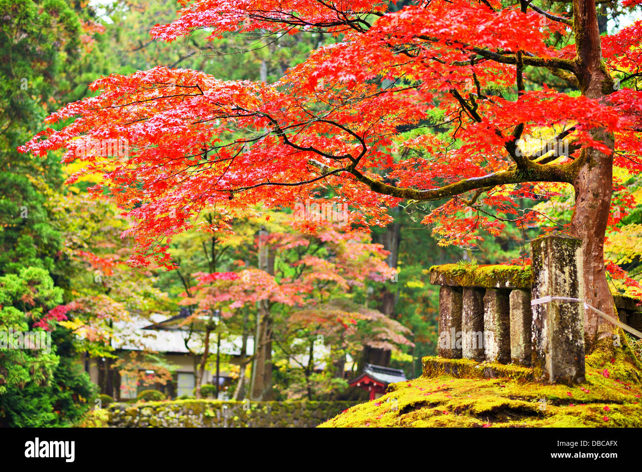 Autumn foliage in Nikko, Japan. - Stock Image