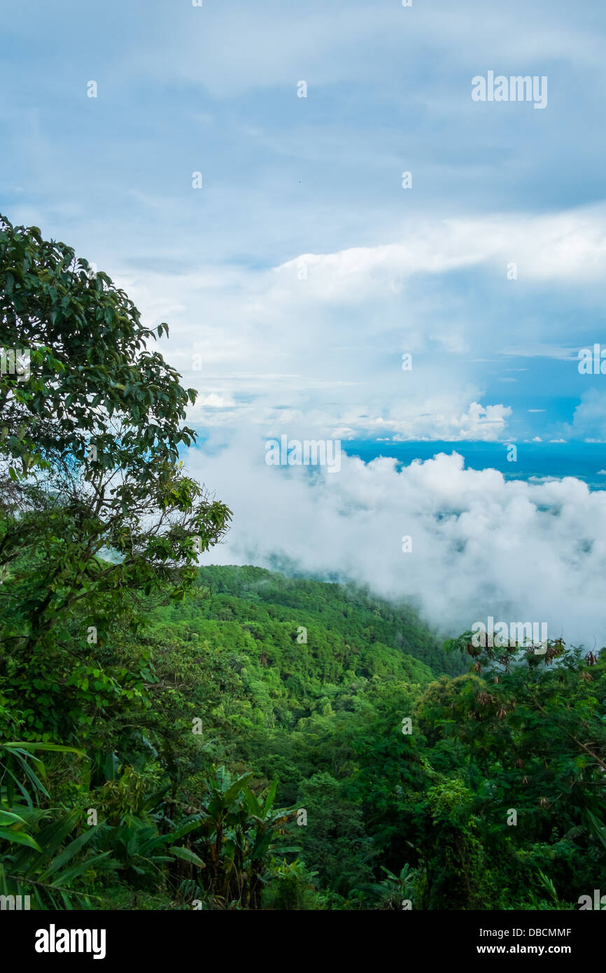 tree on mountain and overcast sky - Stock Image