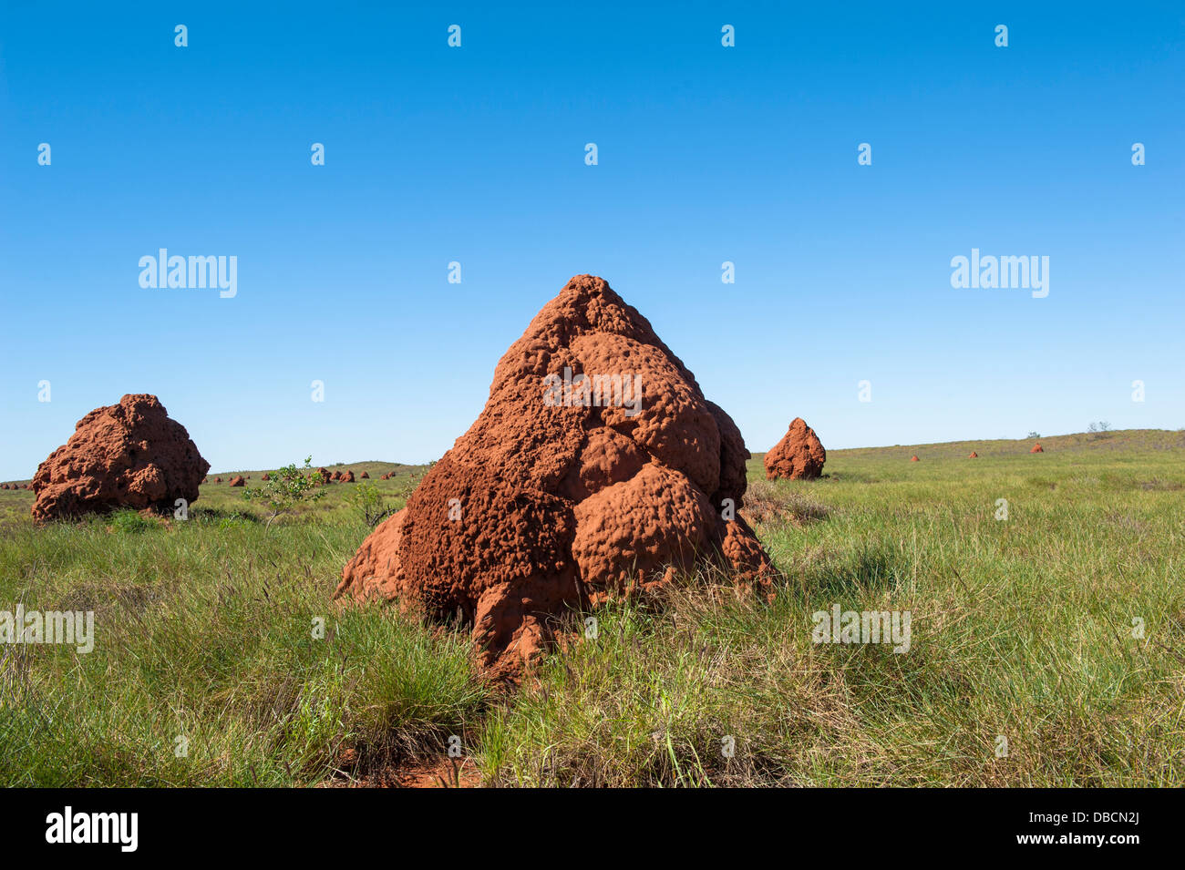 Termite mounds at the 'City of Termites' in the coastal headlands of Onslow, Western Australia - Stock Image