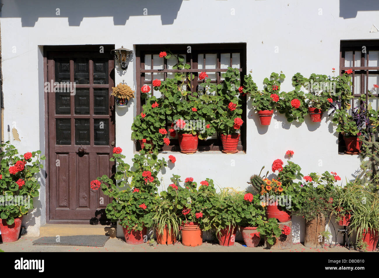 Quaint garden in front of cottage with flowering red pot plants - Stock Image