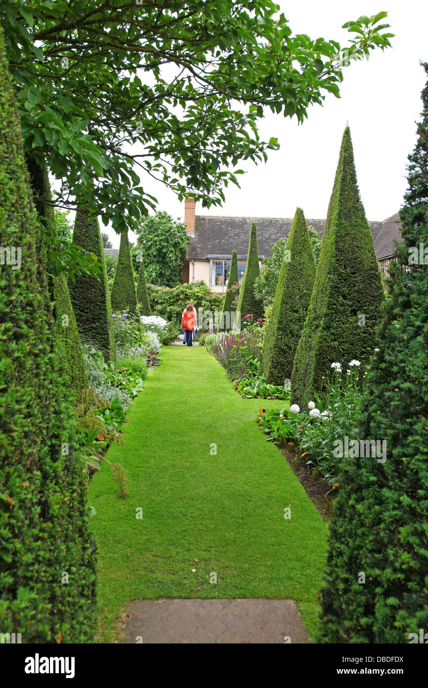 Clipped yew spires of the Yew Walk at Wollerton Old Hall Gardens garden Wollerton Market Drayton Shropshire England - Stock Image