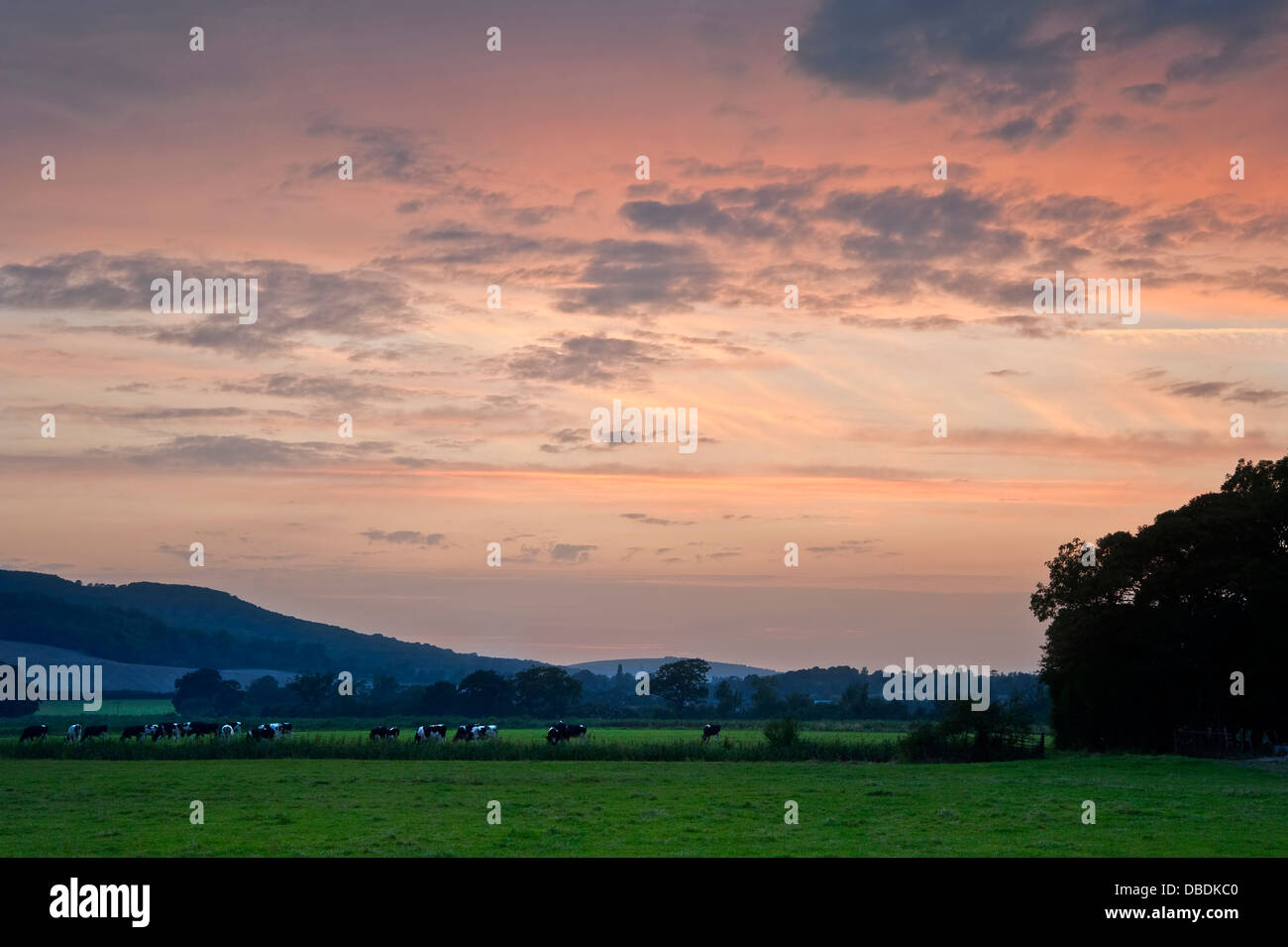 Lovely image through cow field into vibrant sunset English countryside landscape - Stock Image