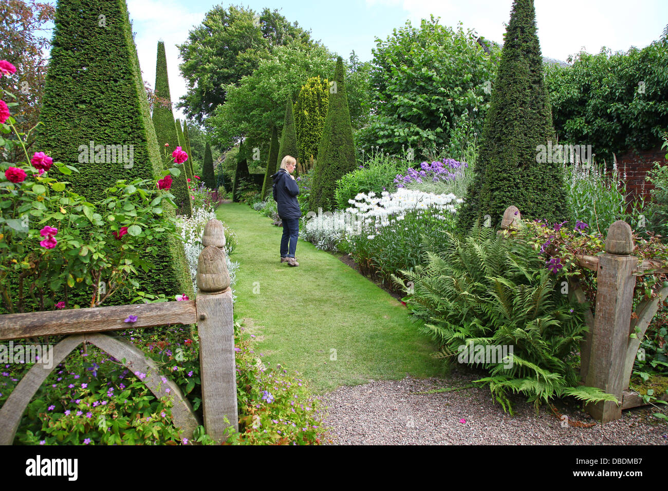 A woman looking at the planting and Clipped yew spires of the Yew Walk at Wollerton Old Hall Gardens garden Wollerton - Stock Image