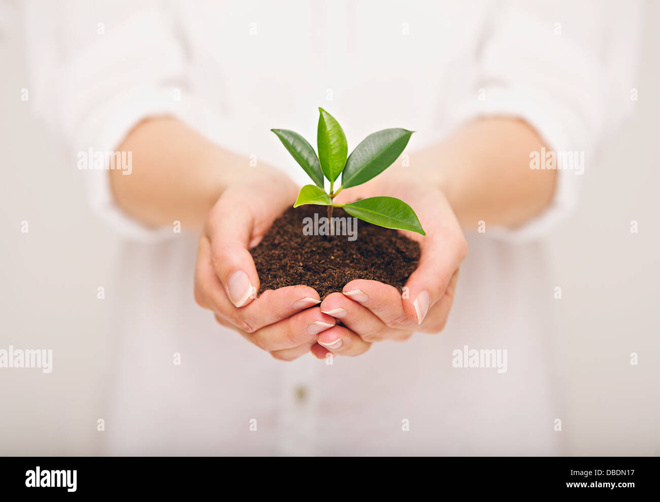 Woman's hand holding young plant, ecology concept - Stock Image