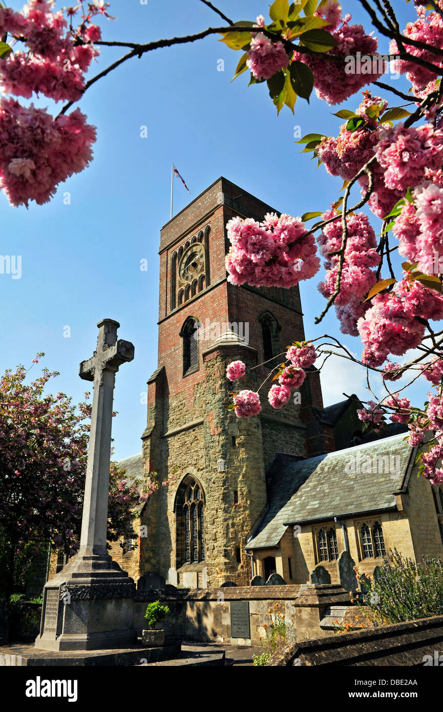 St. Mary the Virgin Church with spring blossom and stone cross in the foreground, Petworth, West Sussex, England, - Stock Image