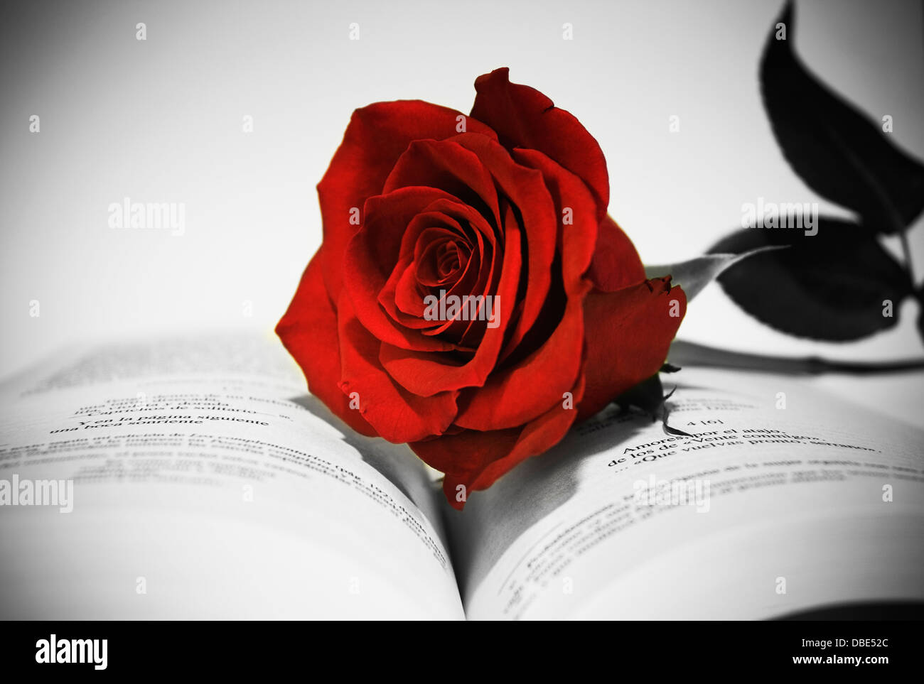 Open book with red rose still life in black and white and red rose selectivepoeticromanticlovephotographcreativeflower