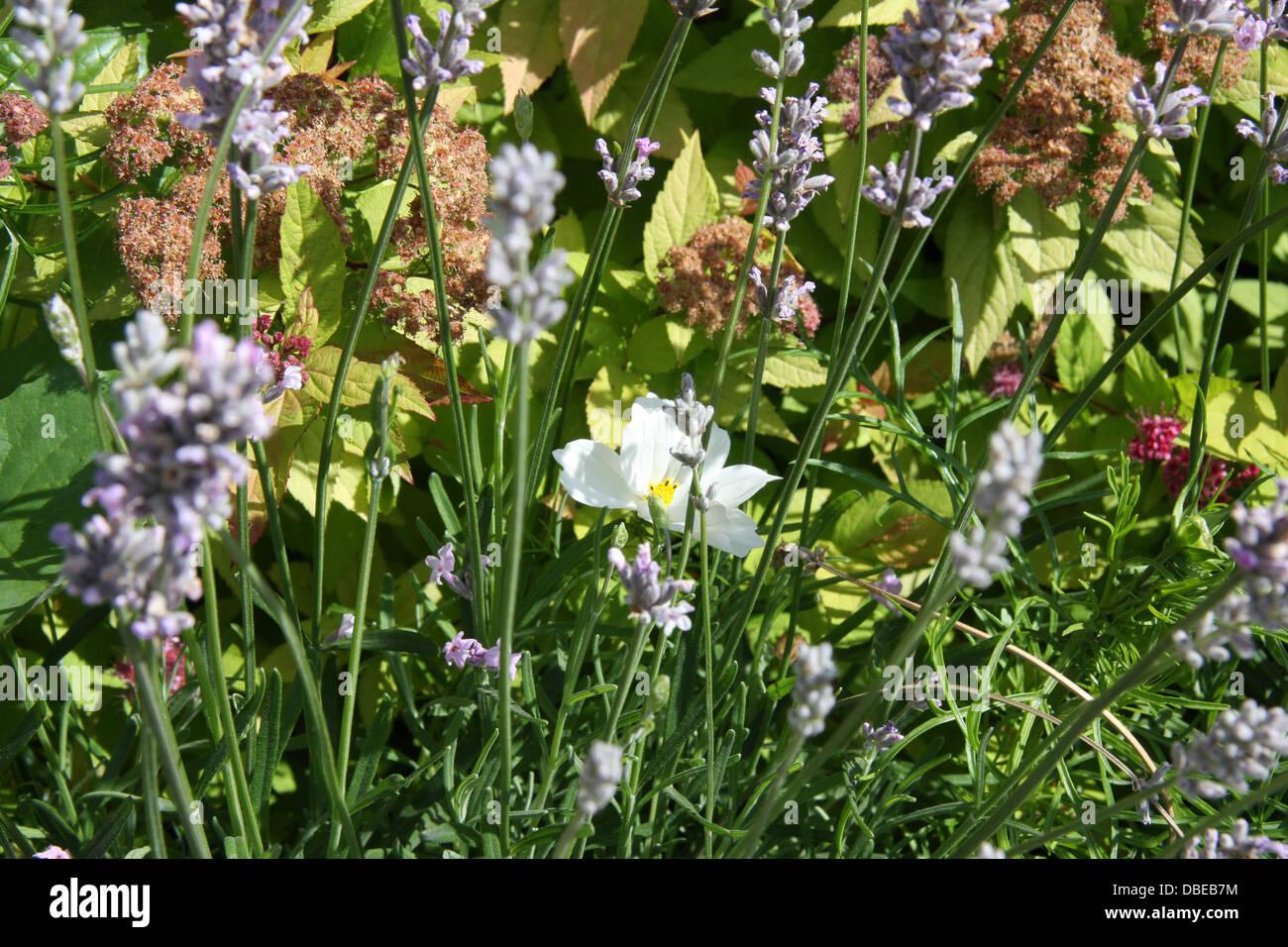 Spring Flowers London United Kingdom Stock Photos Spring Flowers