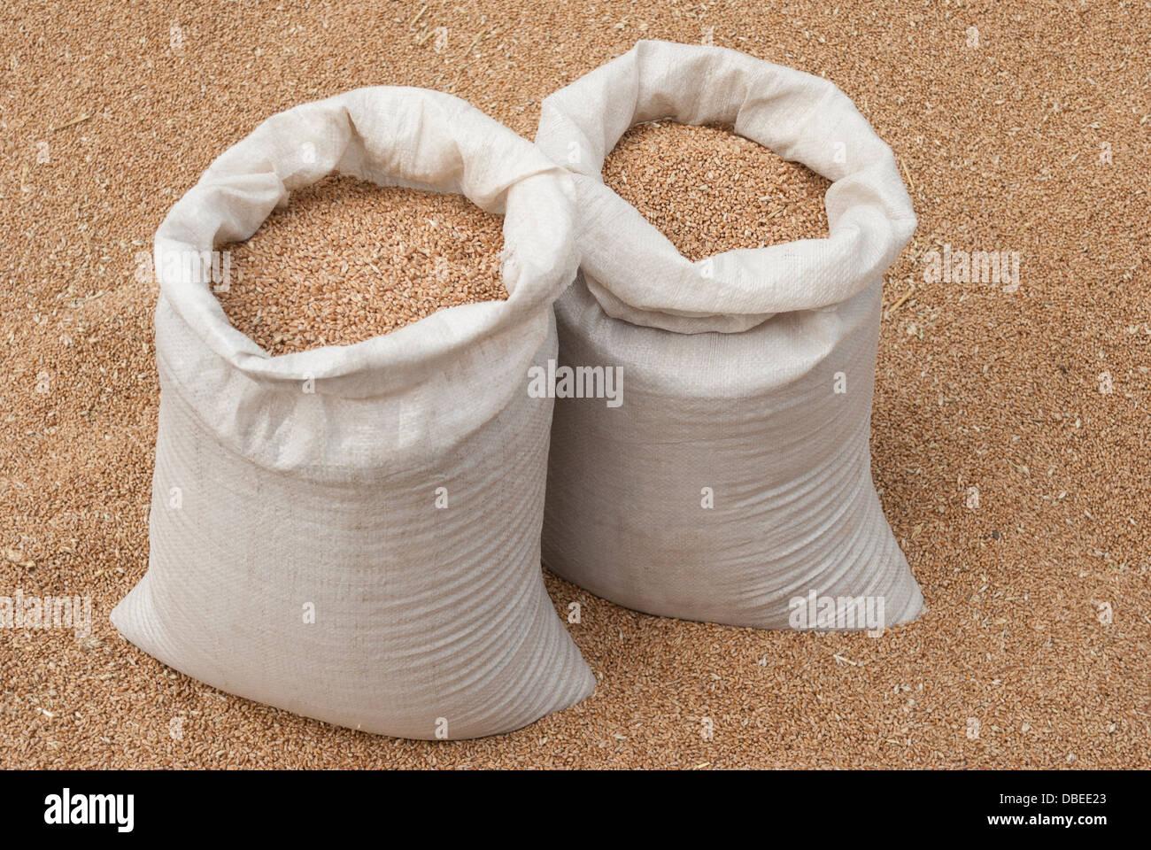 Sacks of wheat. - Stock Image