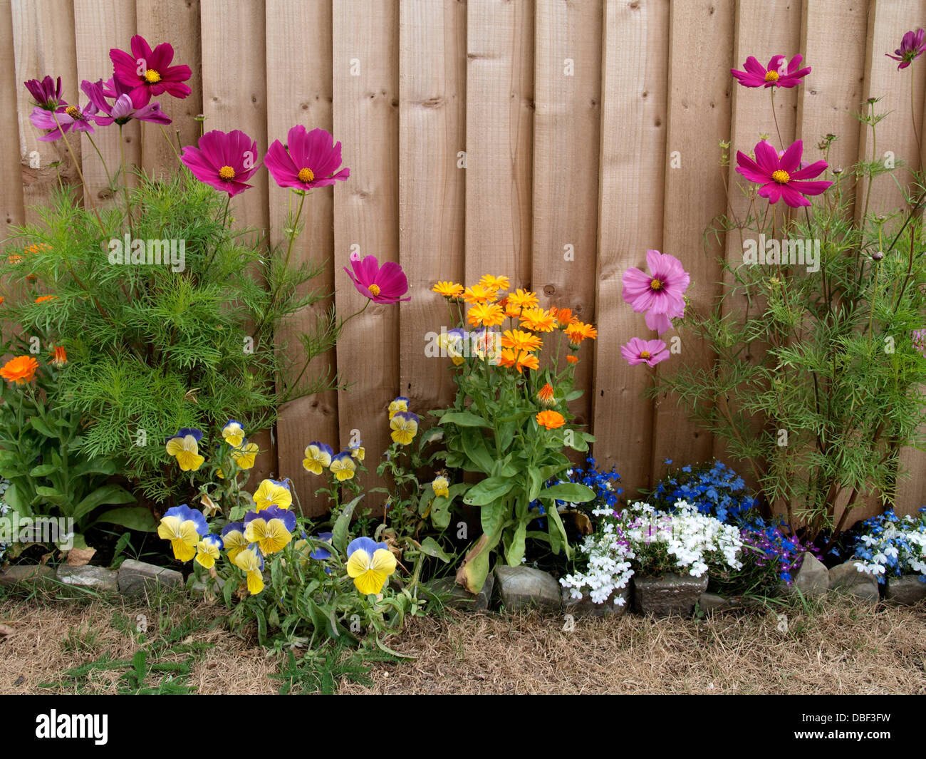 garden flowers in front of a wooden fence, uk 2013 stock photo