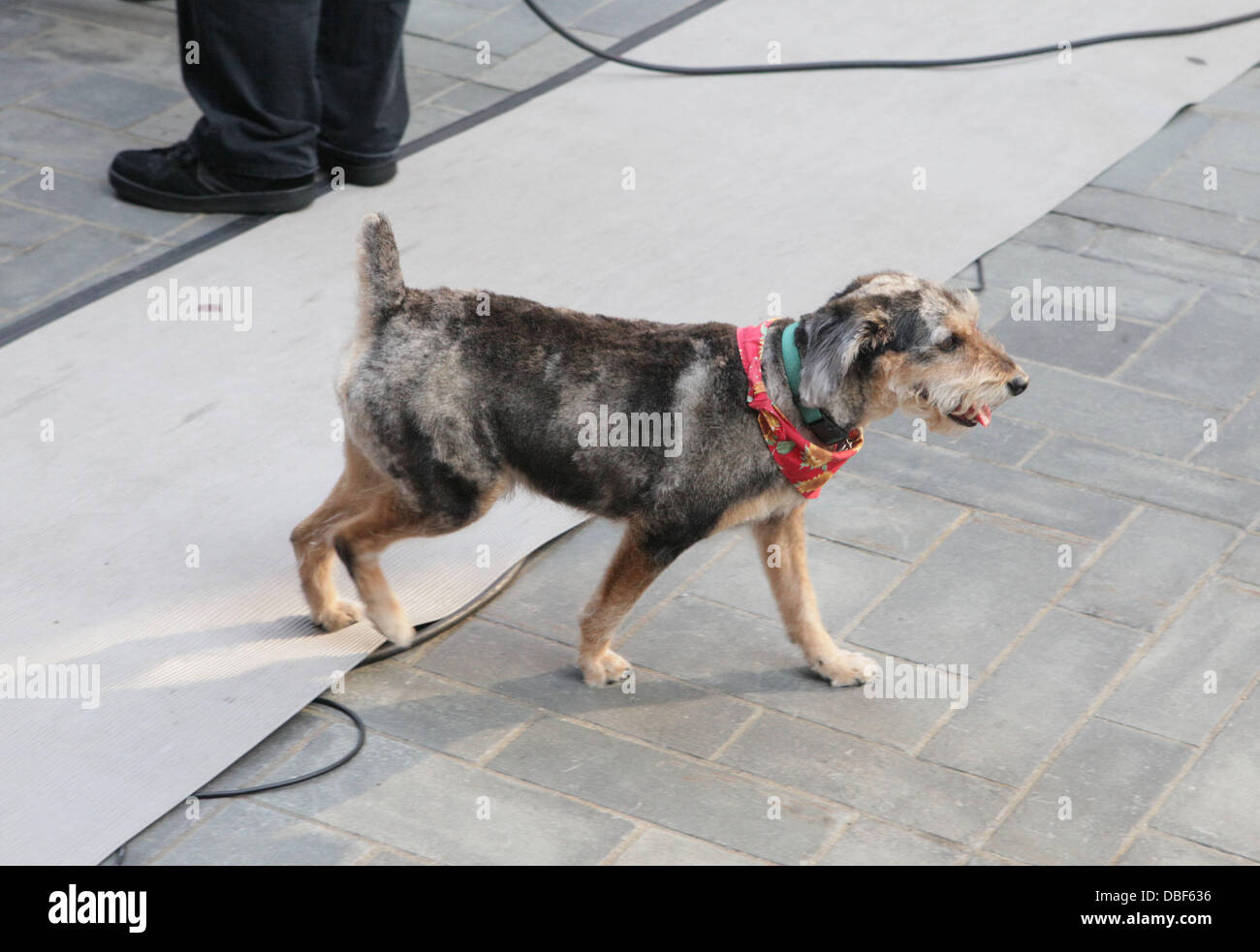 Meredith Vieira's dog Jasper  The 'Today Show' salutes Meredith Vieira's Last Day with NBC Network New York City, Stock Photo