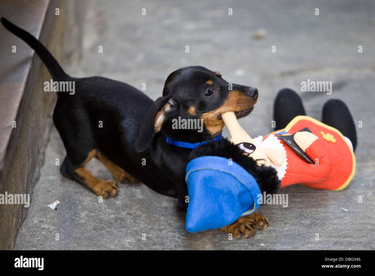 Nelly the Dog has become somewhat of a local attraction, having been seen being cuddled by various members of the - Stock Image