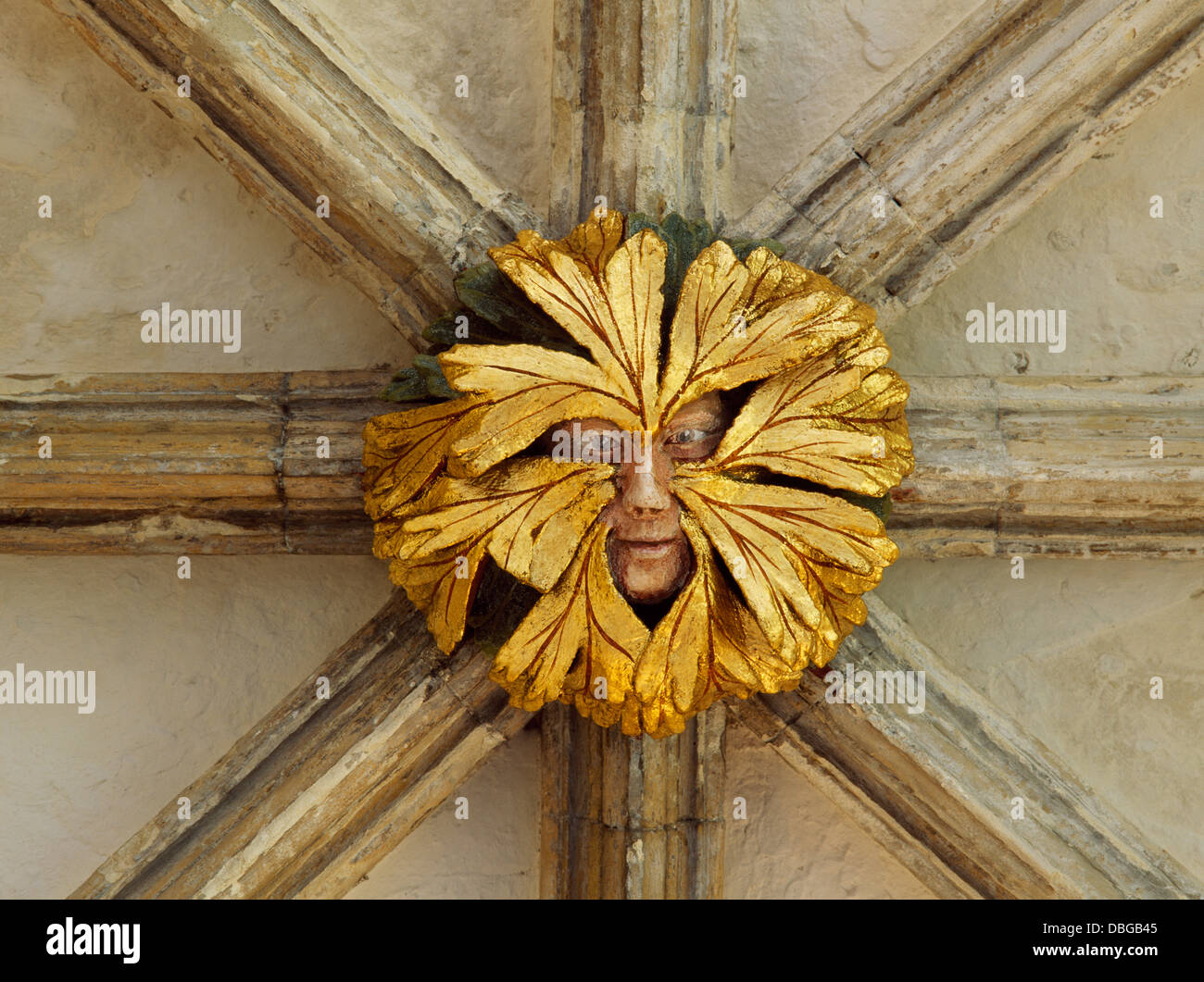 A green man roof boss in the east walk (1297-1318) of Norwich cathedral  priory cloisters, Norfolk, England, wearing a woodland mask of may leaves.