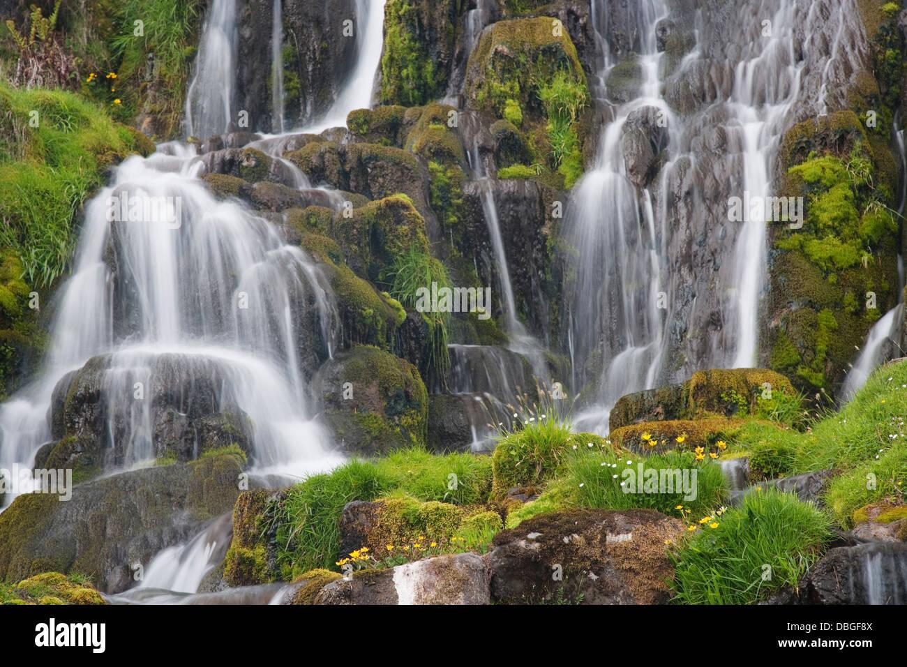 Waterfall with moss and flowers Isle of Skye, Inner Hebrides Scotland, UK LA006357 - Stock Image