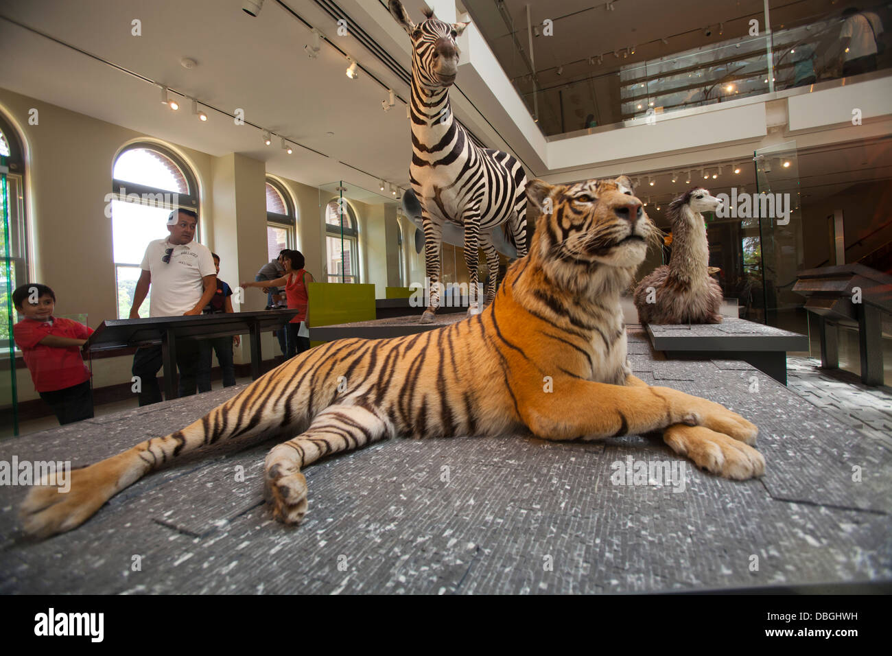 Museum of Natural History, Los Angeles, California, United States of America - Stock Image
