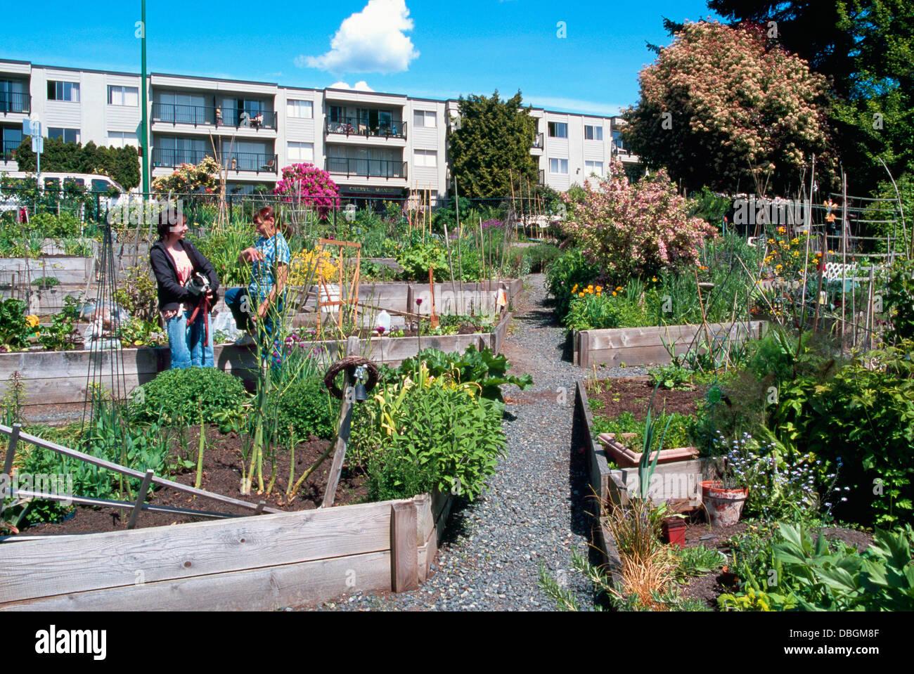 Community Garden, Urban Gardens, North Vancouver, BC, British Columbia,  Canada